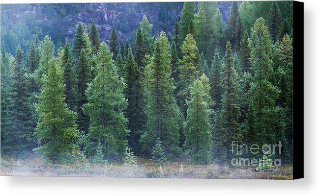 Trees Canvas Print featuring the photograph Trees In The Mist by Jale Fancey