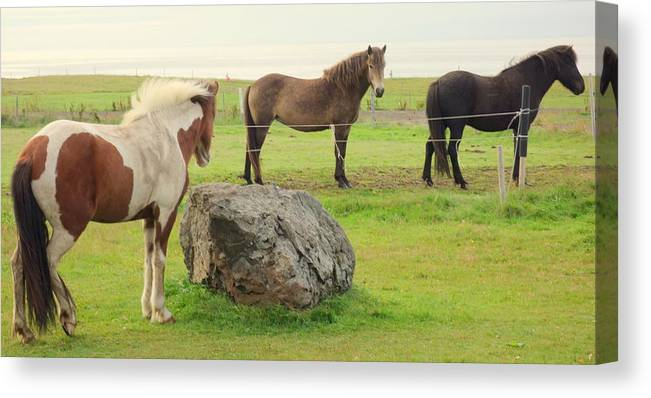 Horses Canvas Print featuring the photograph There Were Three Horsegirls And One Big Gray Stone by Hilde Widerberg