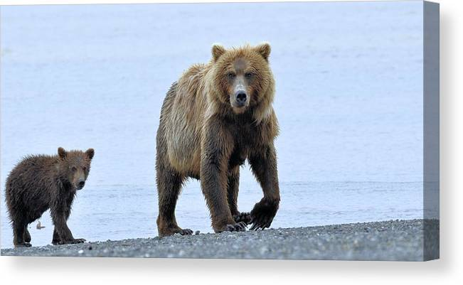 Canvas Print featuring the photograph Sow And Cub by Tahomawind Photography