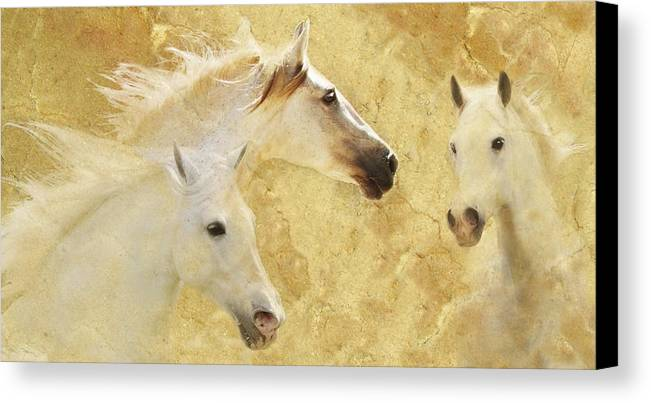 Golden Horses Canvas Print featuring the photograph Golden Steeds by Melinda Hughes-Berland