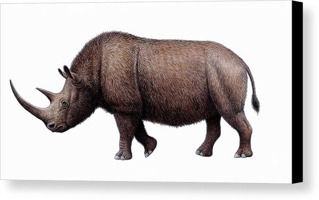 Coelodonta Antiquitatis Canvas Print featuring the photograph Woolly Rhinoceros, Artwork by Mauricio Anton