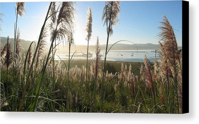 Harbor Canvas Print featuring the photograph Princeton Harbor. California by Bob Bennett