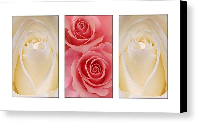 Rose Canvas Print featuring the photograph Rose Series by Jill Reger