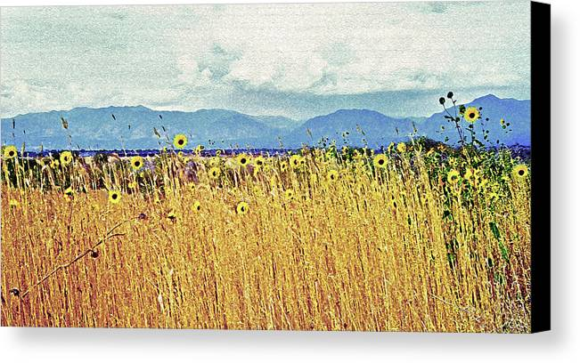 Fields Canvas Print featuring the photograph Sunflower Field 2 by Steve Ohlsen