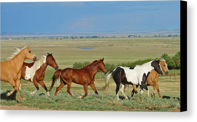 Herd Canvas Print featuring the photograph Wild Horses Wyoming by Heather Coen