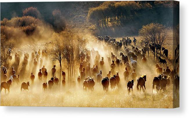 Mongolia Canvas Print featuring the photograph Horses by Hua Zhu