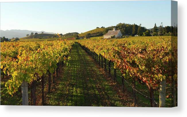 Scenics Canvas Print featuring the photograph Napa Valley Vineyard In Autumn by Leezsnow