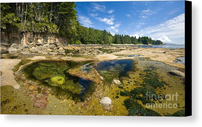 Botanical Beach Canvas Print featuring the photograph Botanical Beach by Matt Tilghman