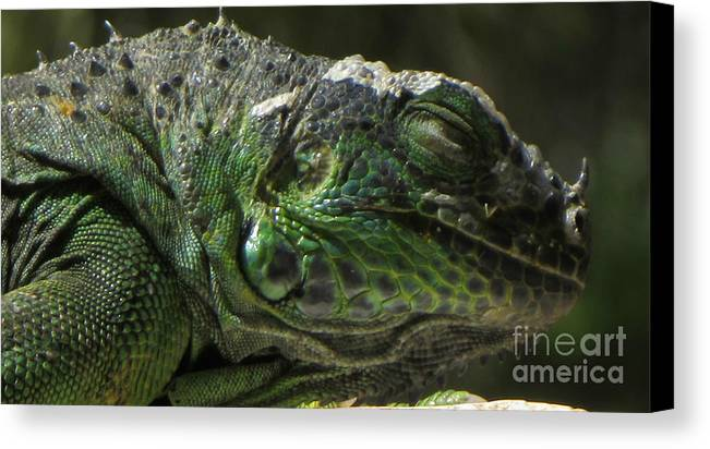 Animal Canvas Print featuring the photograph I Am Beautiful by Bozena Simeth