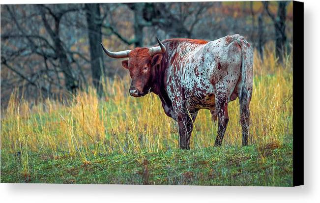 Angeln Cattle Canvas Print featuring the photograph Red Bull by Brian Stevens