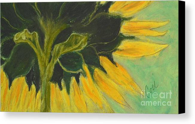Sunflower Canvas Print featuring the drawing Sunny Side Up by Cori Solomon