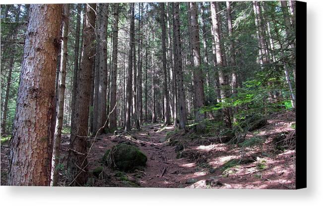 Pieropainting - Pineta Di Schilpario - Pine Forest - Landscape - Mountain - Val Di Scalve - Bergamo - Italy - Photography Canvas Print featuring the photograph Pineta Di Schilpario by Piero C