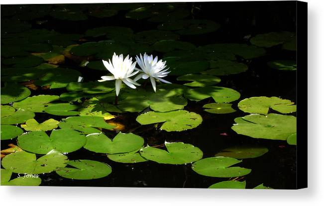 Water Canvas Print featuring the photograph Wading Fairies by Shelley Jones