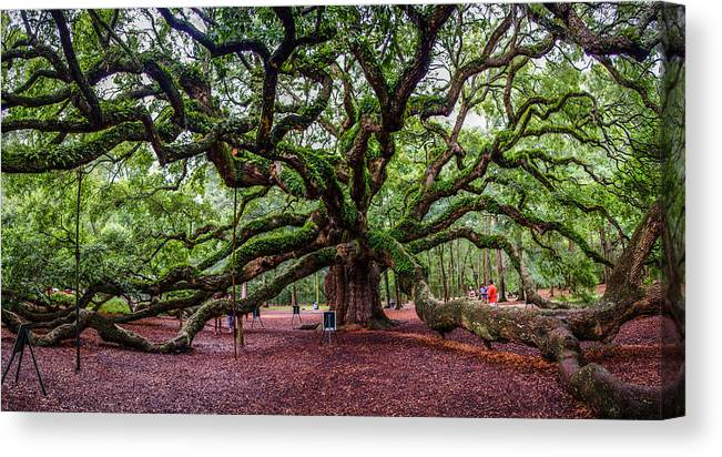 Angel Canvas Print featuring the photograph Angel Oak by Jeff Ortakales