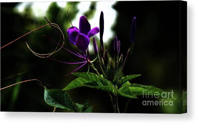 Flower Canvas Print featuring the photograph Moonlight Dance by Linda Shafer
