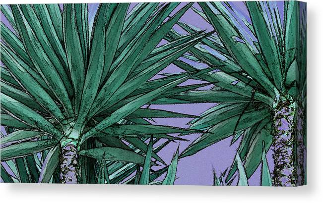 Yucca Canvas Print featuring the photograph Yucca Tops by Ben and Raisa Gertsberg