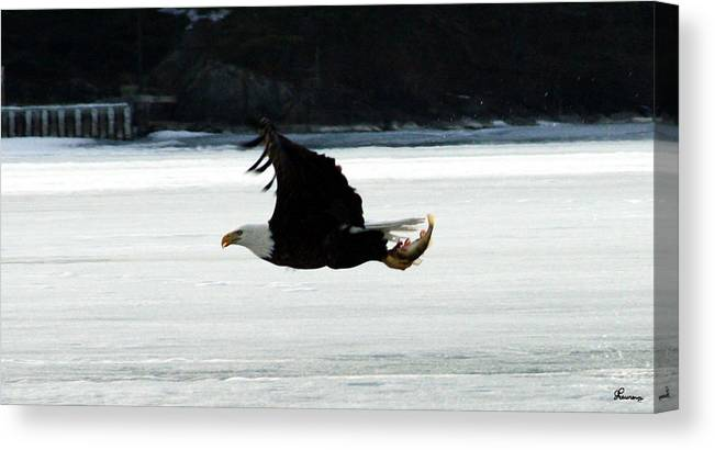 American Eagle Bird Flying Wings Fish Nature Wild Animal Canvas Print featuring the photograph Hungry Eagle by Andrea Lawrence