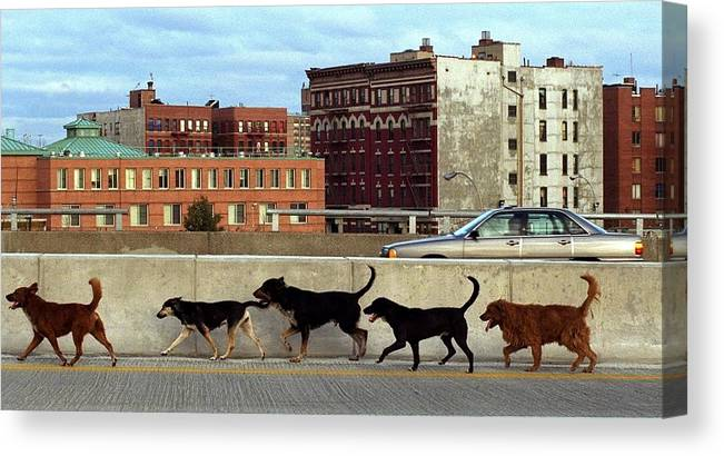 Usa Canvas Print featuring the photograph Stray Dogs Stroll Along The Bruckner by New York Daily News Archive