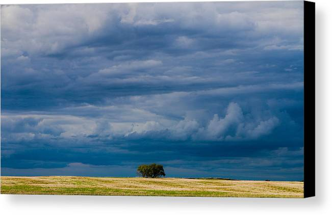 Tree Canvas Print featuring the photograph I Stand Alone by Lisa Holland