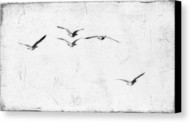 Geese Canvas Print featuring the photograph The Leader by Rebecca Cozart