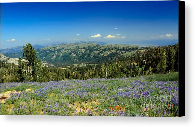 Southwest Idaho Canvas Print featuring the photograph Vast View And Lupine by Robert Bales