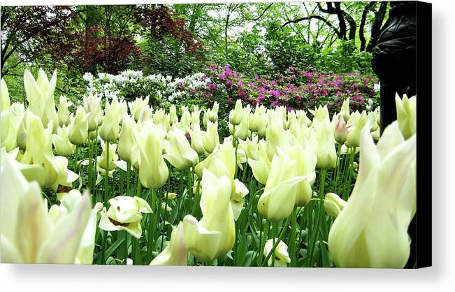 Central Park Canvas Print featuring the photograph Central Park Tulips by Lorraine Devon Wilke