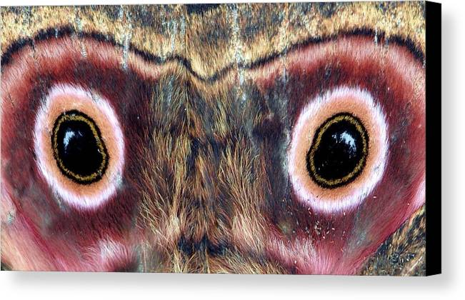 Wings Canvas Print featuring the photograph Eyes by Chris Minihane