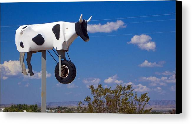 Cow Canvas Print featuring the photograph Cow Power by Skip Hunt