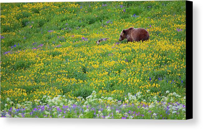 Yellowstone Np Wy Canvas Print featuring the photograph Flower Power by Timothy Princehorn