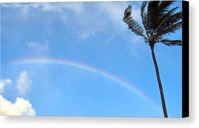 Palm Tree Canvas Print featuring the photograph Rainbow Palm by Nicole I Hamilton