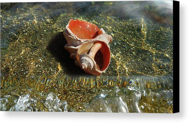 Shell Canvas Print featuring the photograph Rapana by Yuri Hope