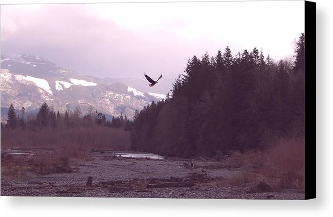 Eagle Canvas Print featuring the photograph The Freedom To Fly by J D Banks