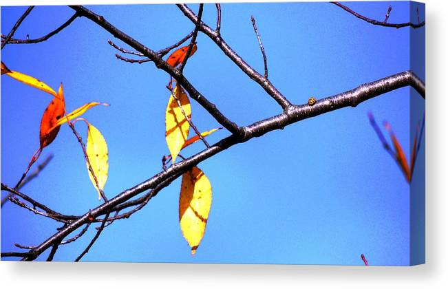 Autumn Canvas Print featuring the photograph Lady Bug And Leaves by Karen Majkrzak