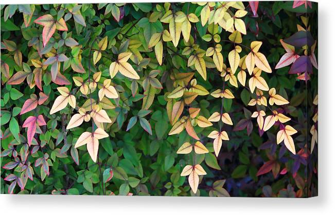 Nature Canvas Print featuring the photograph Yellow Leaves by Linda Phelps