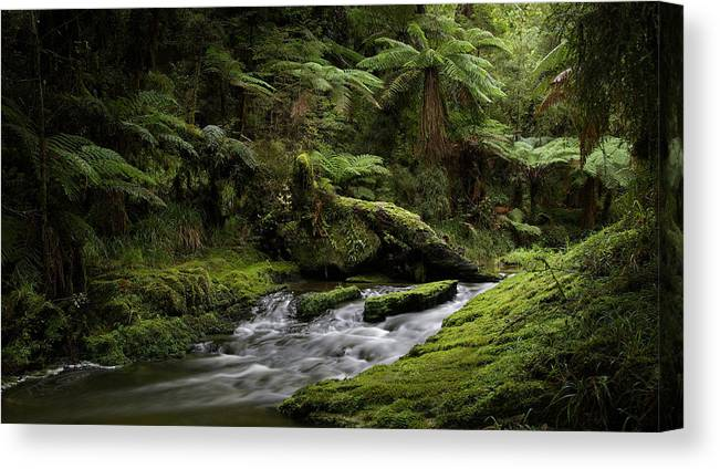 Tree Ferns Canvas Print featuring the photograph Islands Of Green 2 by Peter Prue
