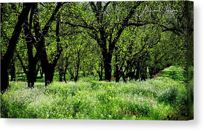 Landscape Canvas Print featuring the photograph Pecan Tree Lane by Alfie Wace