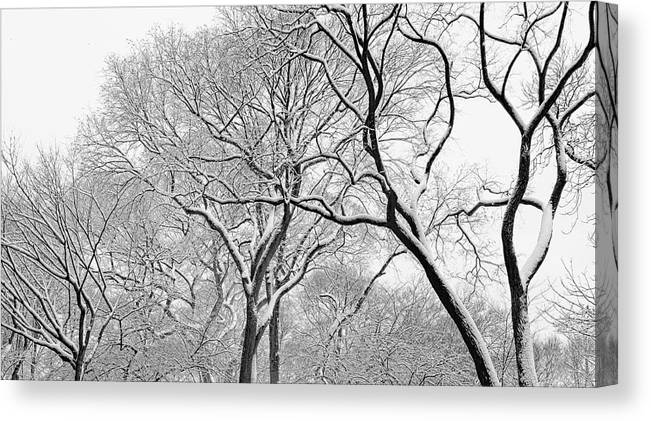 Snow Canvas Print featuring the photograph Winter Panorama by Robert Ullmann