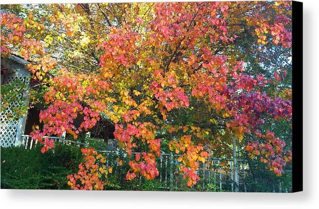 Fall Canvas Print featuring the photograph Pallette Of Fall Colors by Kenny Glover