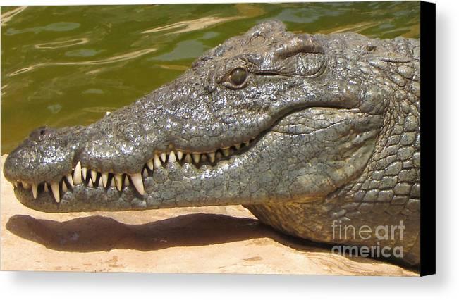 Crocodile Canvas Print featuring the photograph crocodile of the Nile by Bozena Simeth