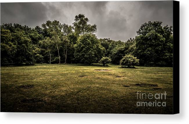 Forest Canvas Print featuring the photograph Field And Tress by Fred Imon