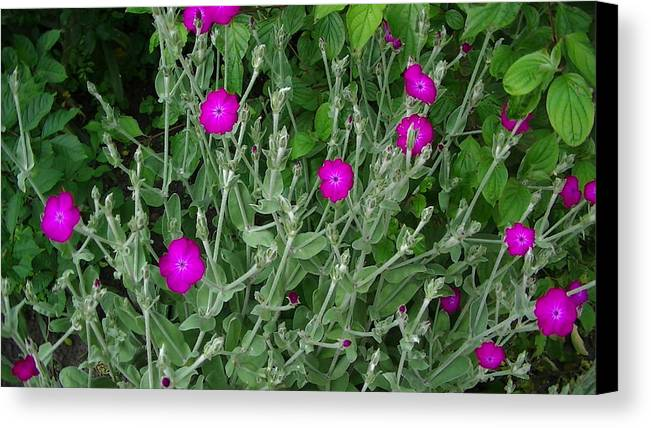 Flowers Canvas Print featuring the photograph Glowing Flowers by Willem Ten Napel