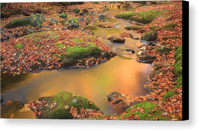 New England Autumn Canvas Print featuring the photograph Golden by Bill Wakeley