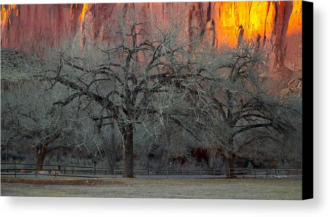 Gold Canvas Print featuring the photograph Golden Hour by Southwindow Eugenia Rey-Guerra