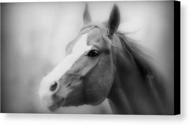 Horse Canvas Print featuring the photograph Horse Cutting Through Fog Black And White by Aurelio Zucco