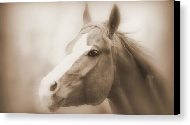 Horse Canvas Print featuring the photograph Horse Cutting Through Fog - Sepia by Aurelio Zucco