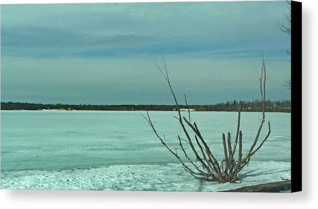 Winter Canvas Print featuring the photograph Ice Tree by Tony Ambrosio