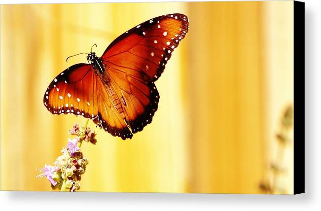 Butterfly Canvas Print featuring the photograph Queenie by Marcia Breznay