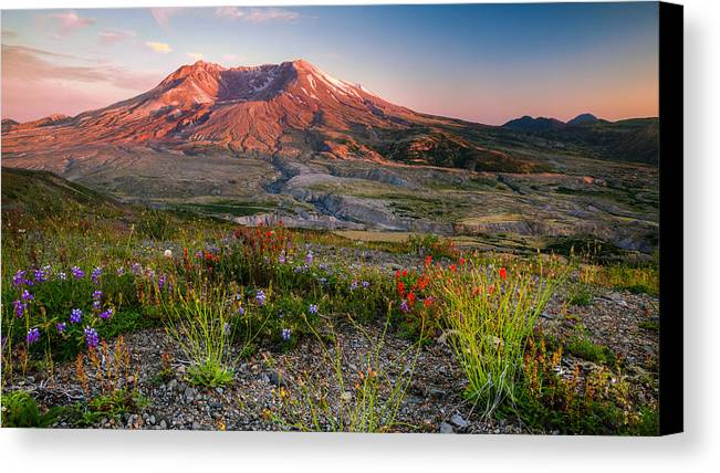 Mount Saint Helens Canvas Print featuring the photograph Saint Helens by Anthony J Wright