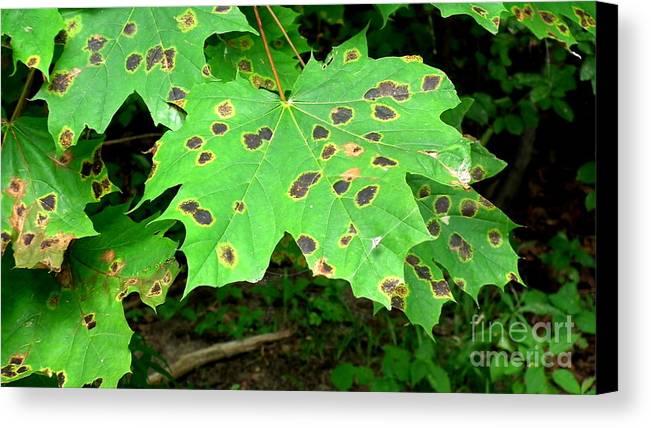 Canvas Print featuring the photograph Speckled Leaves by Deborah Selib-Haig DMacq