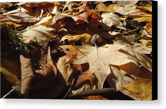 Autumn Canvas Print featuring the photograph To Everything There Is A Season by J Anthony Shuff